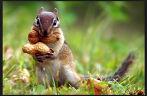 google images Blog about a squirrel? Maybe...