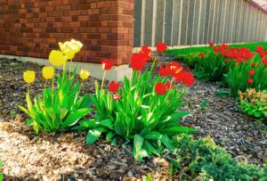 BLOG tulips