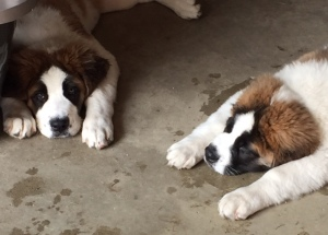BLOG doggies