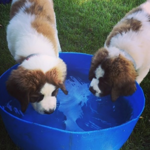 BLOG dogs water