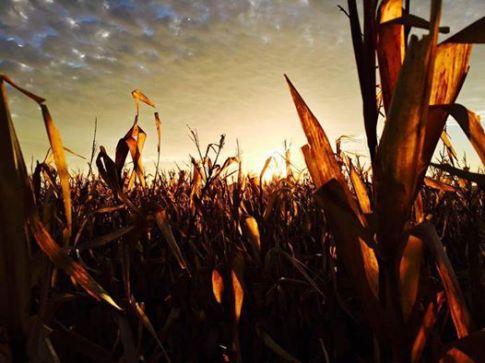 harvest16