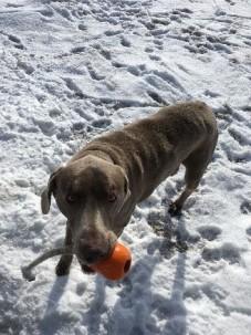 Blog guest rhonda dog (2)